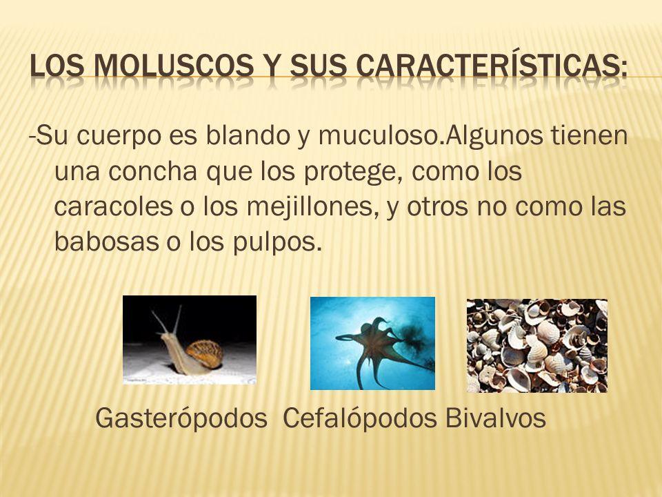 Los moluscos y sus características: