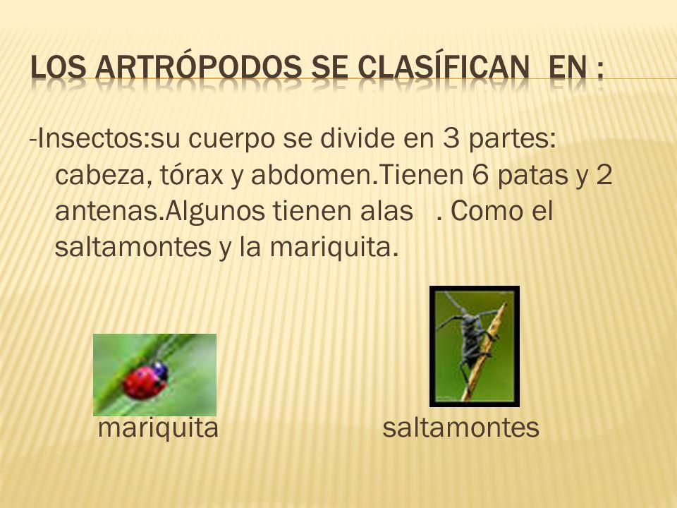LOS artrópodos se clasífican en :