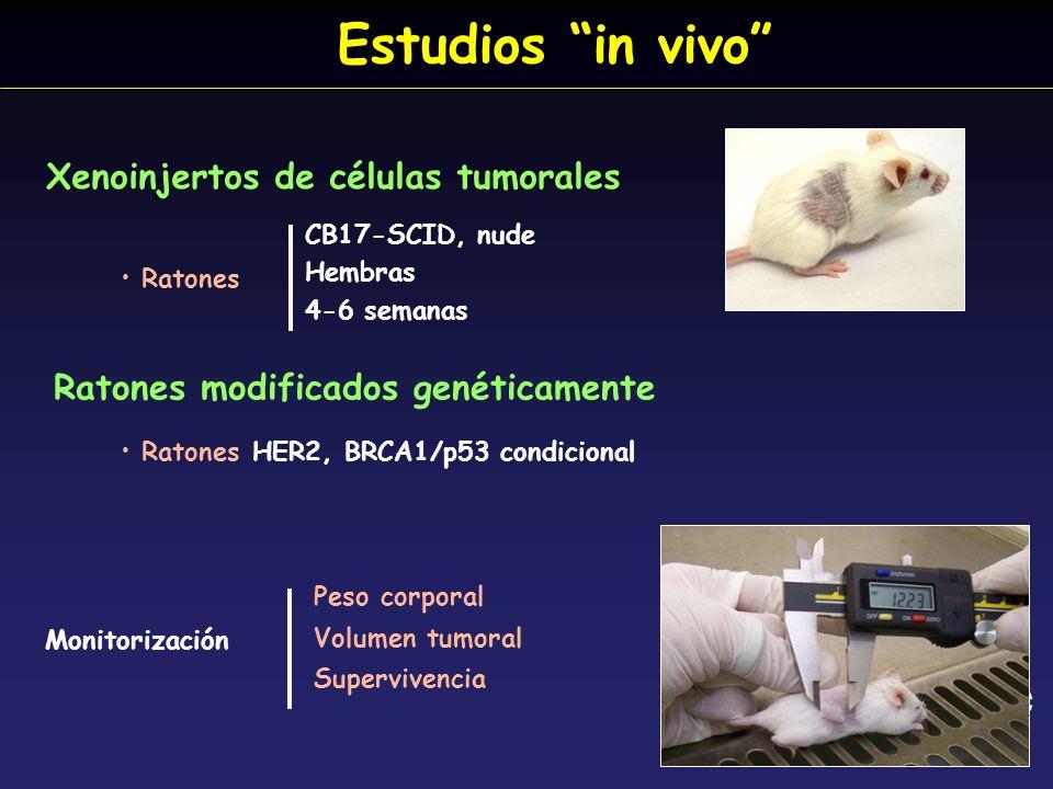 Estudios in vivo Xenoinjertos de células tumorales