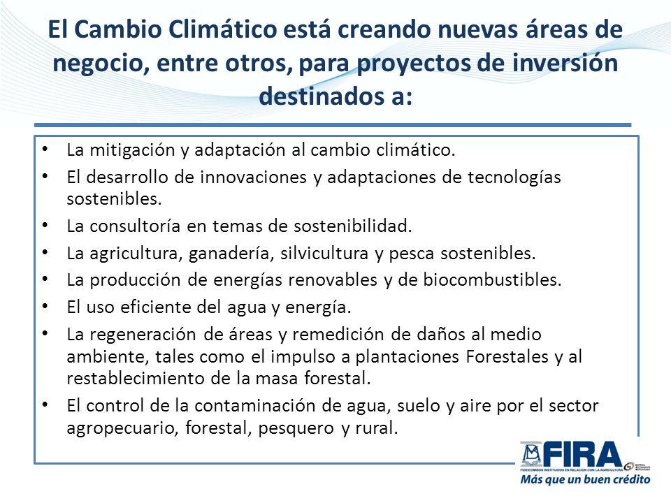 El Cambio Climático está creando nuevas áreas de negocio, entre otros, para proyectos de inversión destinados a: