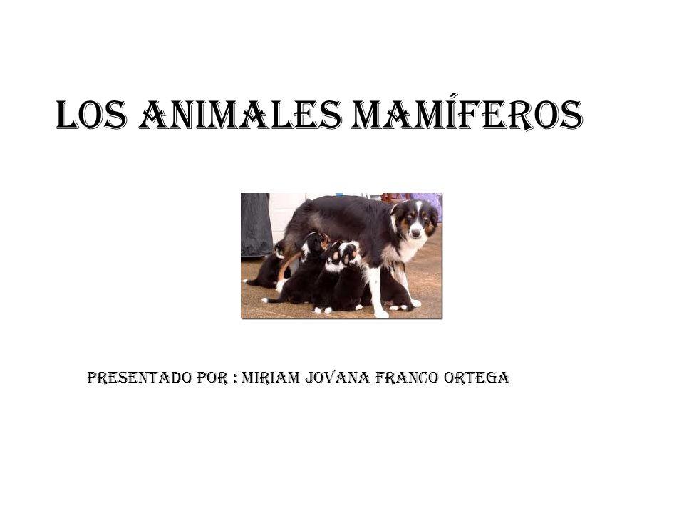 Los animales mamíferos