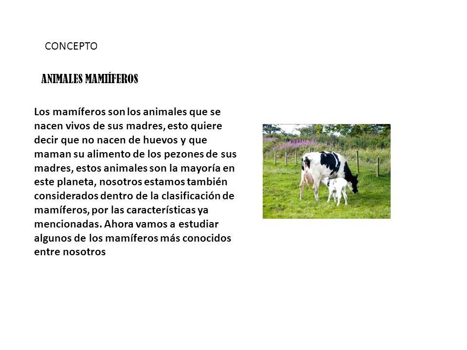 CONCEPTO ANIMALES MAMIÍFEROS.