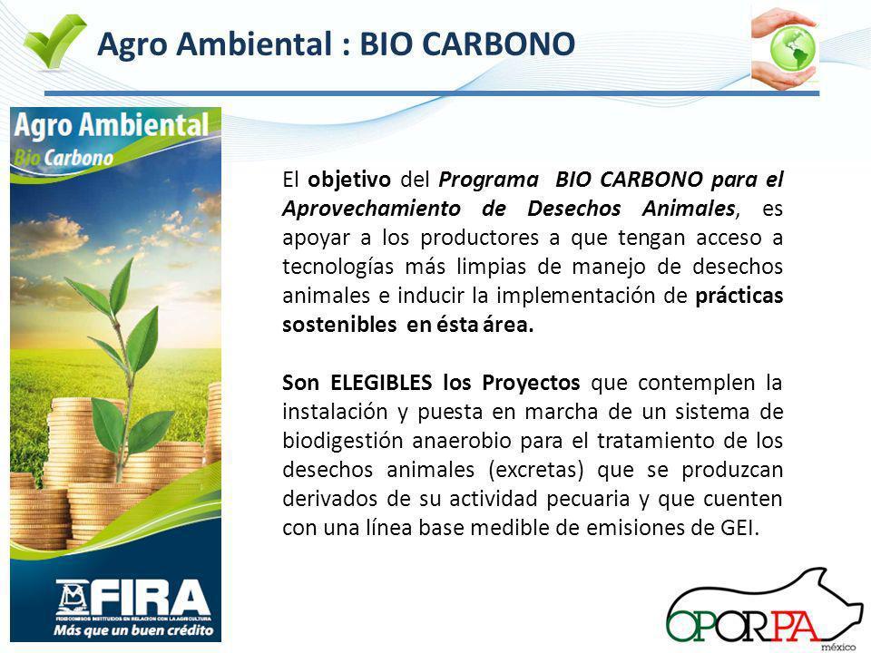 Agro Ambiental : BIO CARBONO