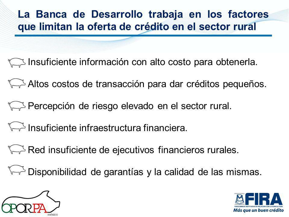 La Banca de Desarrollo trabaja en los factores que limitan la oferta de crédito en el sector rural