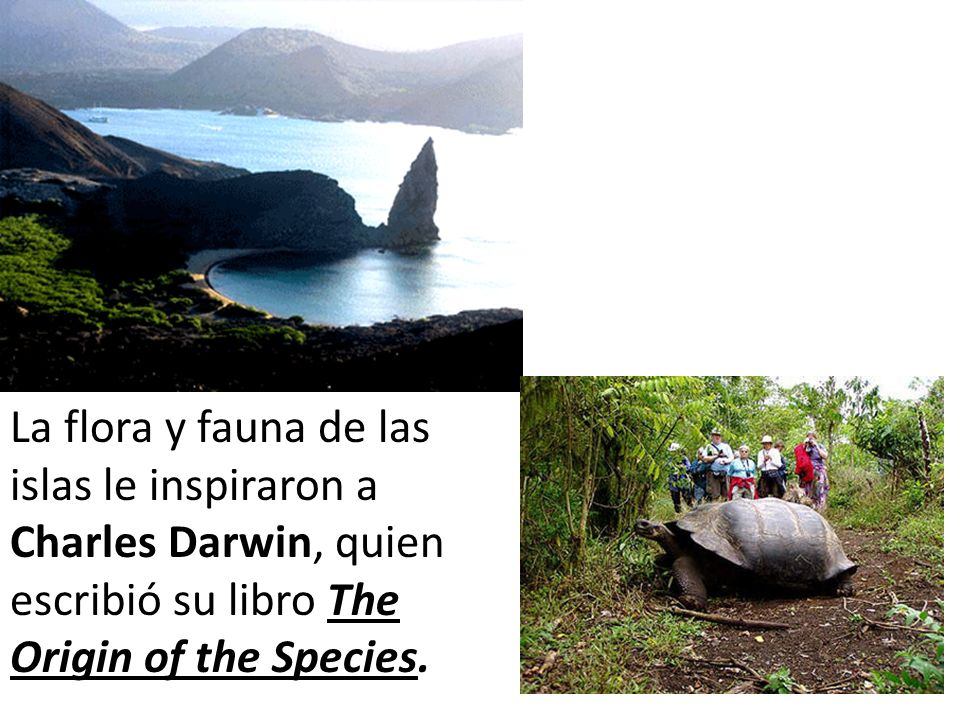 La flora y fauna de las islas le inspiraron a Charles Darwin, quien escribió su libro The Origin of the Species.