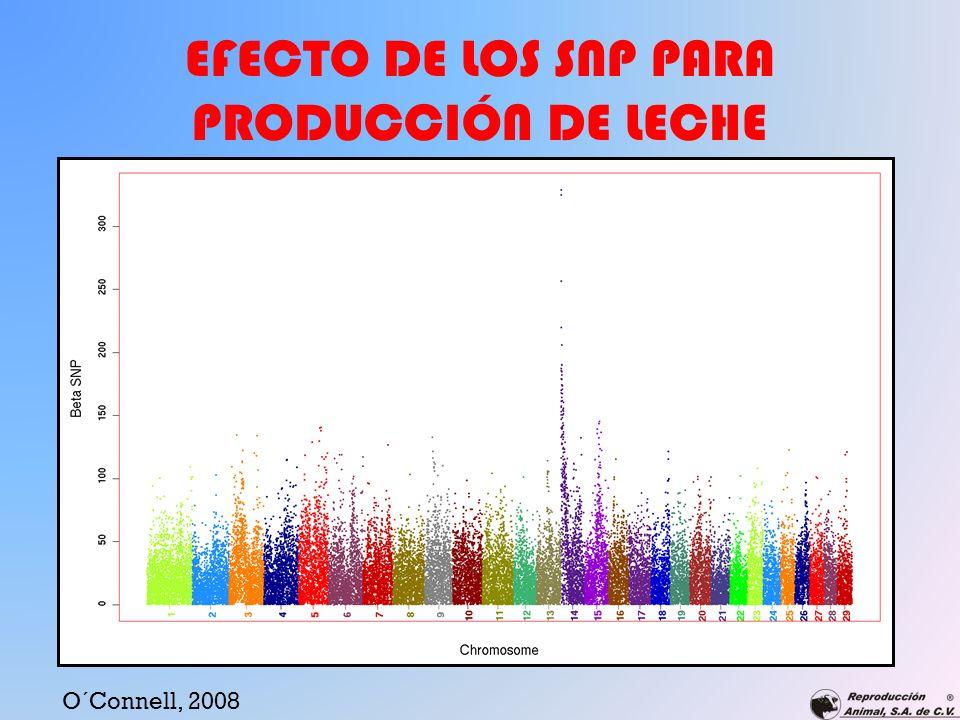 EFECTO DE LOS SNP PARA PRODUCCIÓN DE LECHE