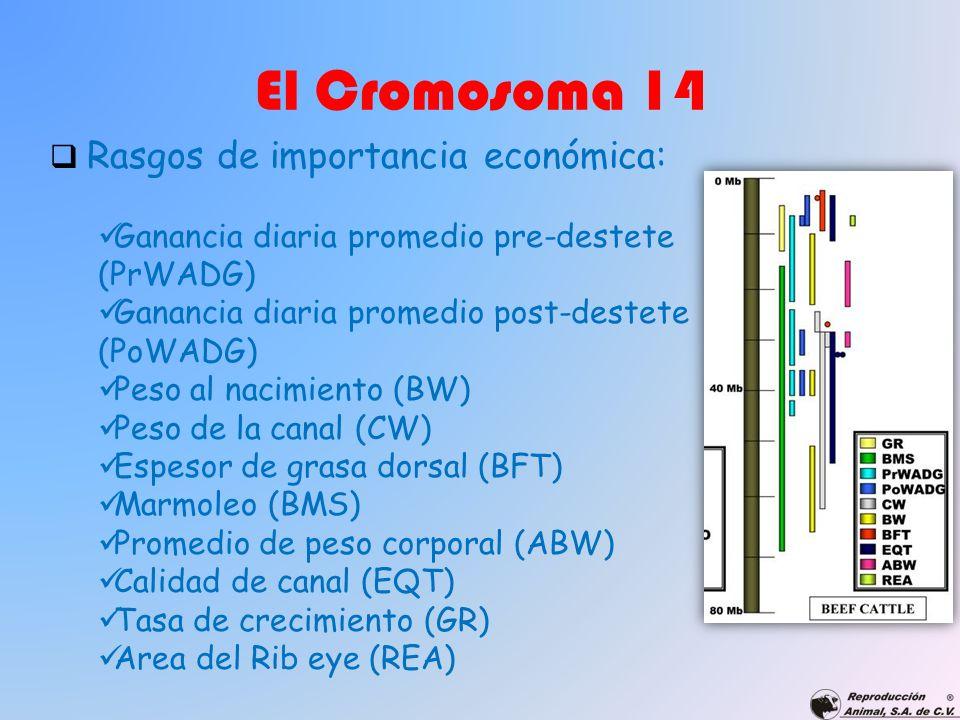 El Cromosoma 14 Rasgos de importancia económica: