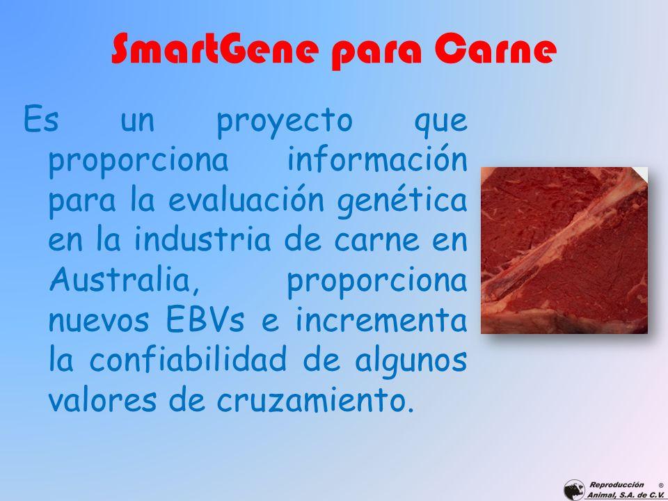 SmartGene para Carne