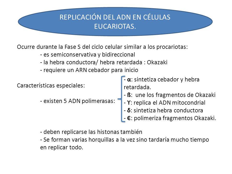 REPLICACIÓN DEL ADN EN CÉLULAS EUCARIOTAS.