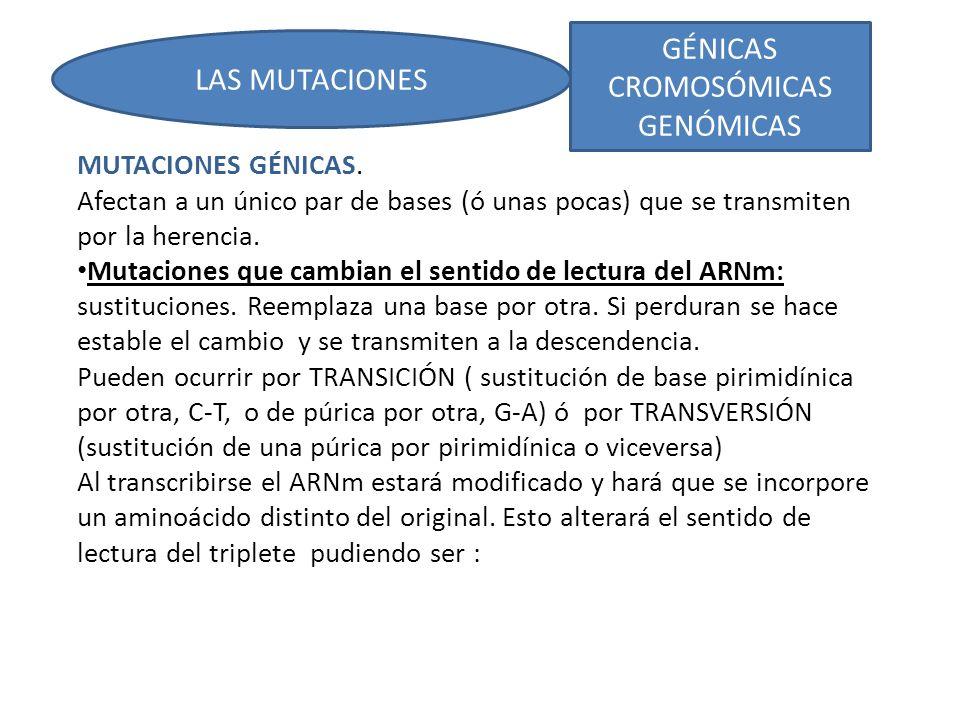 GÉNICAS CROMOSÓMICAS GENÓMICAS LAS MUTACIONES MUTACIONES GÉNICAS.