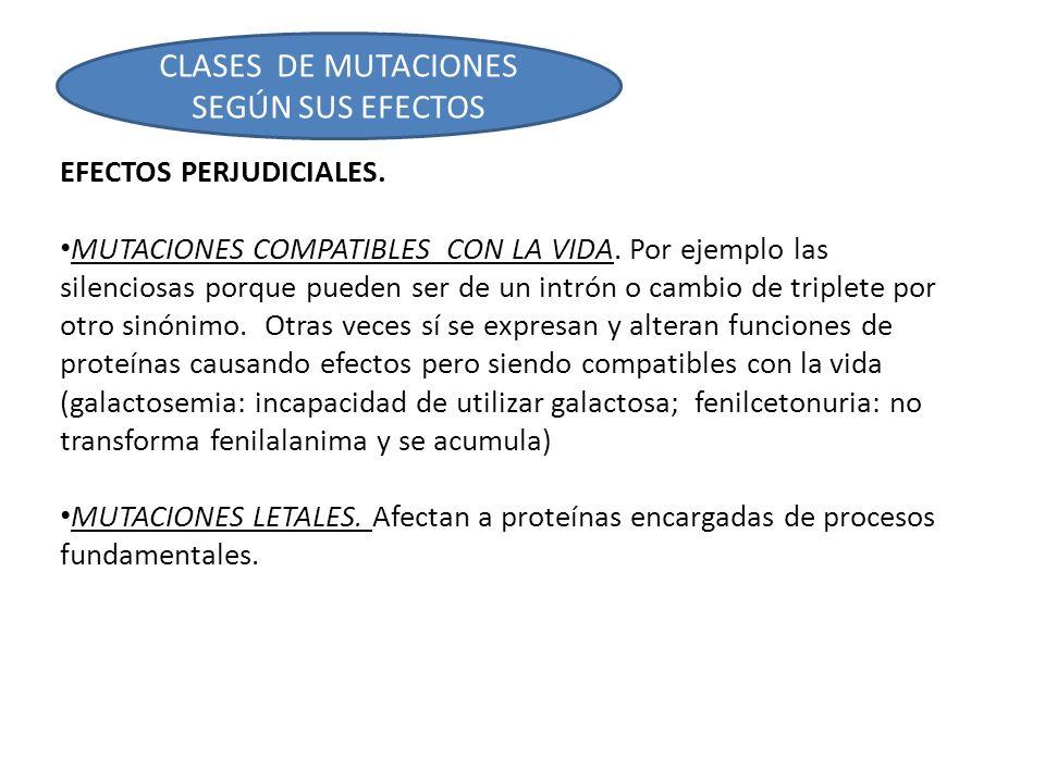CLASES DE MUTACIONES SEGÚN SUS EFECTOS
