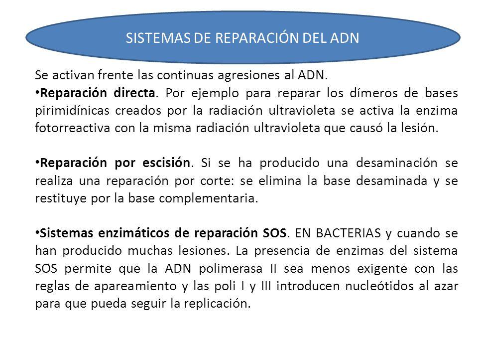 SISTEMAS DE REPARACIÓN DEL ADN