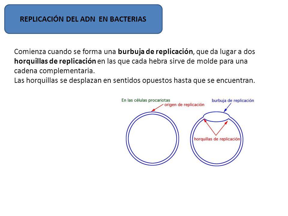 REPLICACIÓN DEL ADN EN BACTERIAS