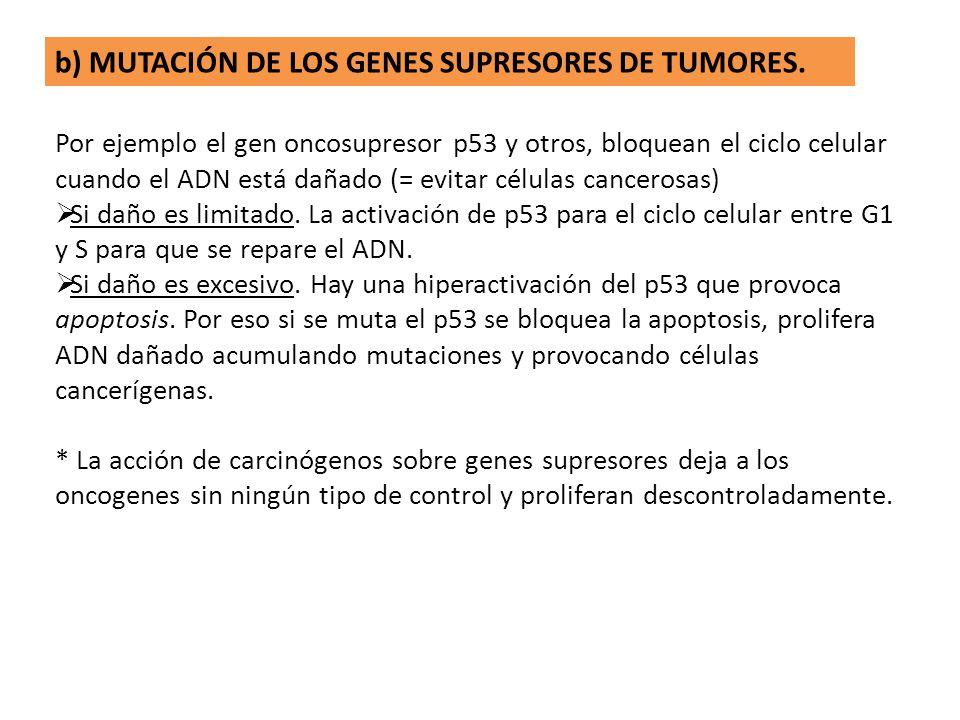 b) MUTACIÓN DE LOS GENES SUPRESORES DE TUMORES.
