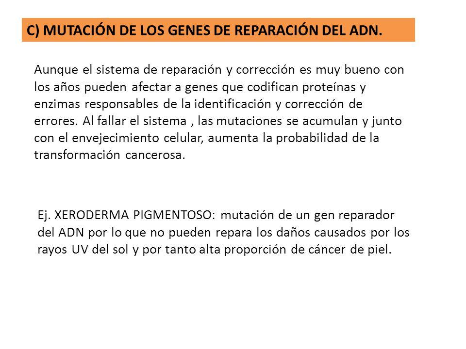 C) MUTACIÓN DE LOS GENES DE REPARACIÓN DEL ADN.