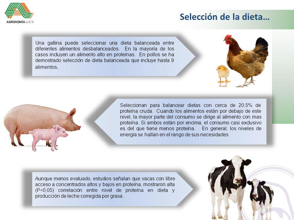 Selección de la dieta… AGRONOMÍA U.C.V.