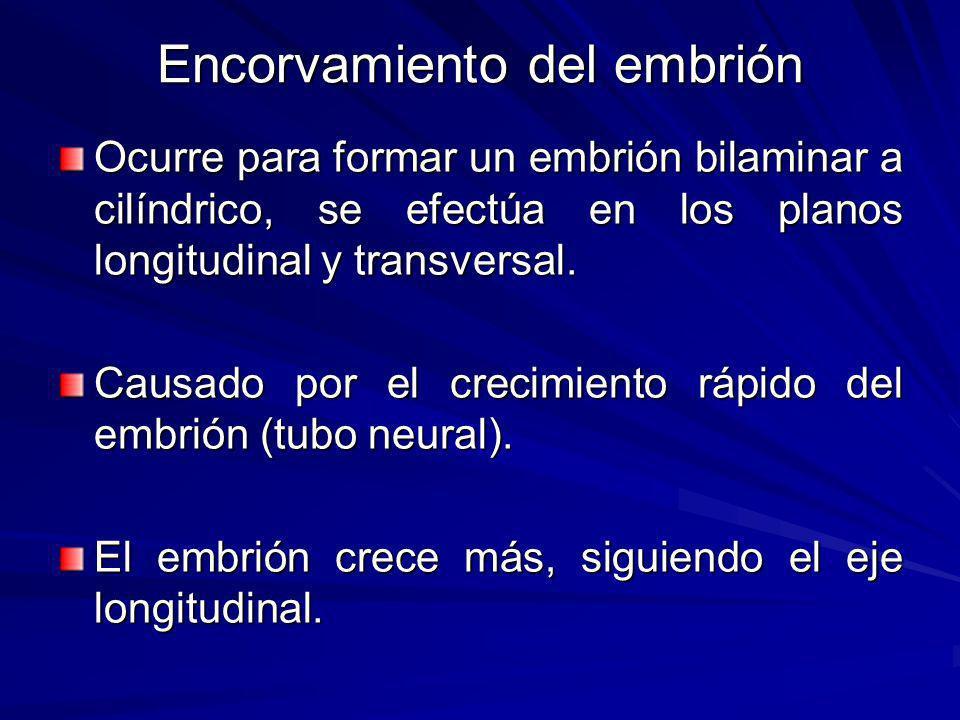 Encorvamiento del embrión