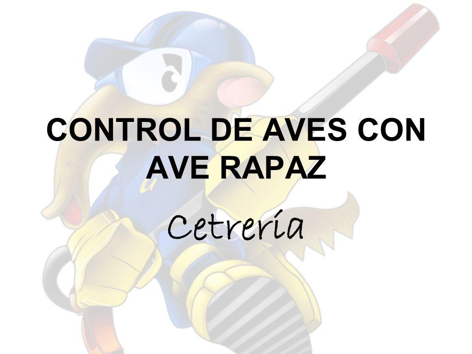 CONTROL DE AVES CON AVE RAPAZ