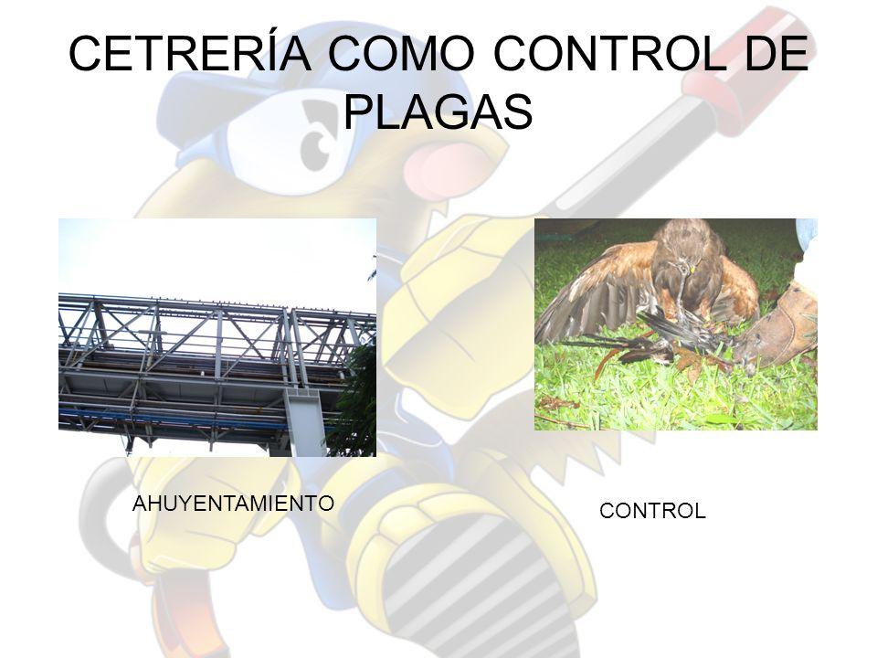 CETRERÍA COMO CONTROL DE PLAGAS