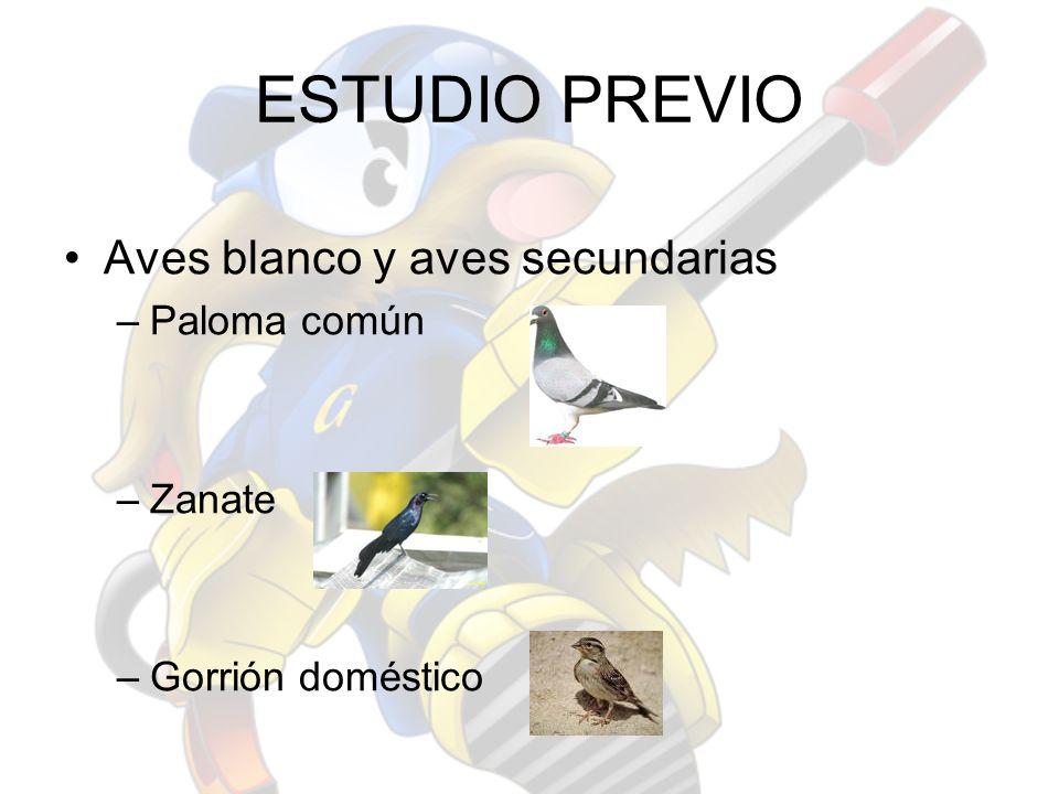 ESTUDIO PREVIO Aves blanco y aves secundarias Paloma común Zanate