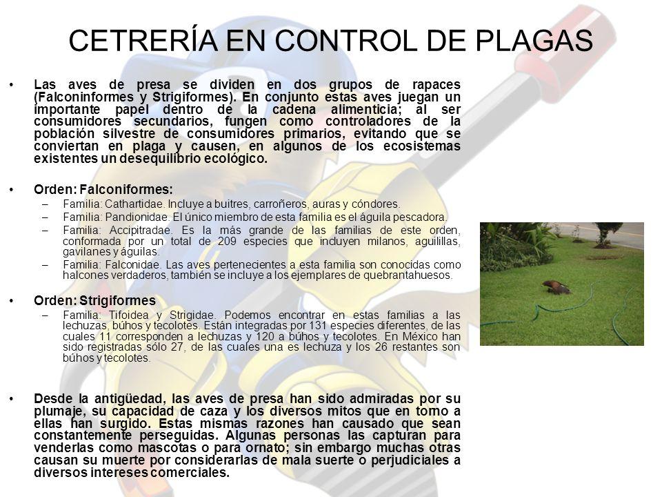 CETRERÍA EN CONTROL DE PLAGAS