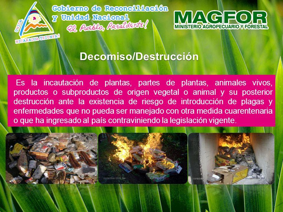 Decomiso/Destrucción