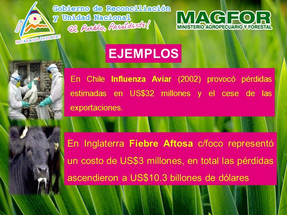 EJEMPLOS En Chile Influenza Aviar (2002) provocó pérdidas estimadas en US$32 millones y el cese de las exportaciones.