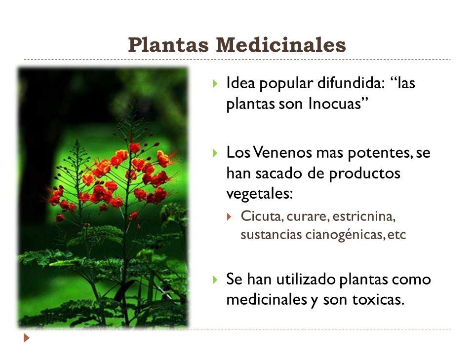 Plantas Medicinales Idea popular difundida: las plantas son Inocuas