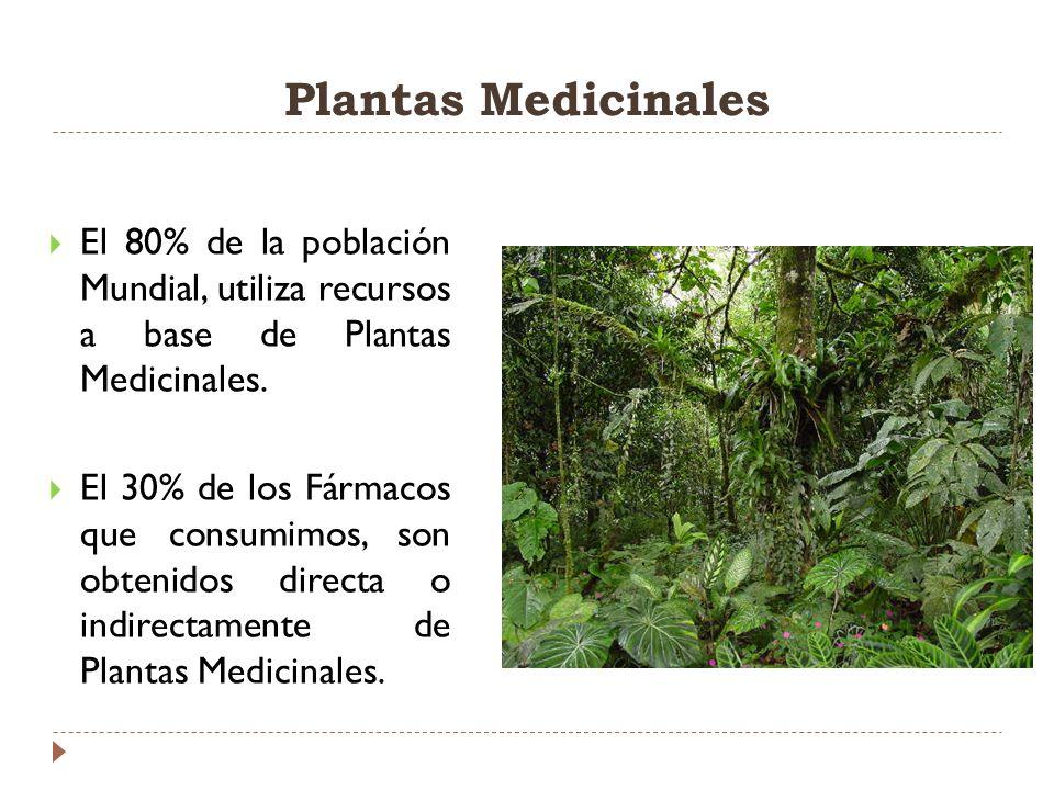 Plantas Medicinales El 80% de la población Mundial, utiliza recursos a base de Plantas Medicinales.