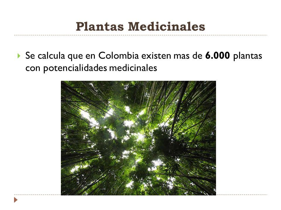 Plantas Medicinales Se calcula que en Colombia existen mas de 6.000 plantas con potencialidades medicinales.