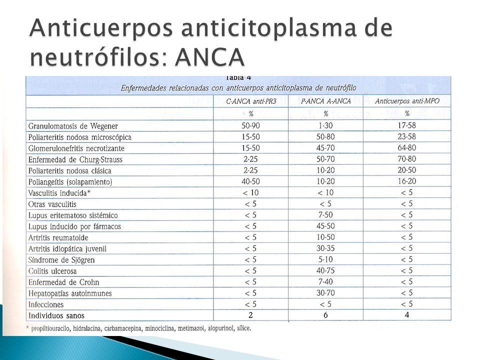 Anticuerpos anticitoplasma de neutrófilos: ANCA