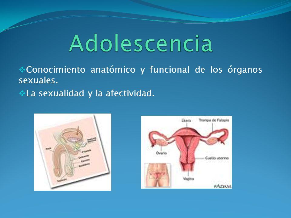 Adolescencia Conocimiento anatómico y funcional de los órganos sexuales.