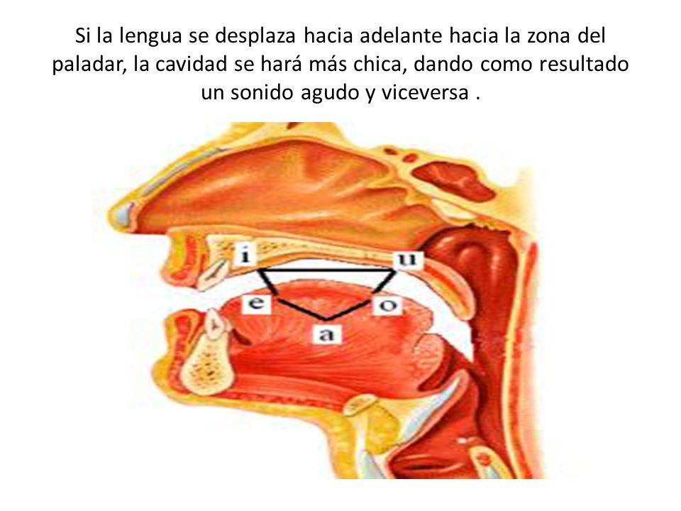 Si la lengua se desplaza hacia adelante hacia la zona del paladar, la cavidad se hará más chica, dando como resultado un sonido agudo y viceversa .