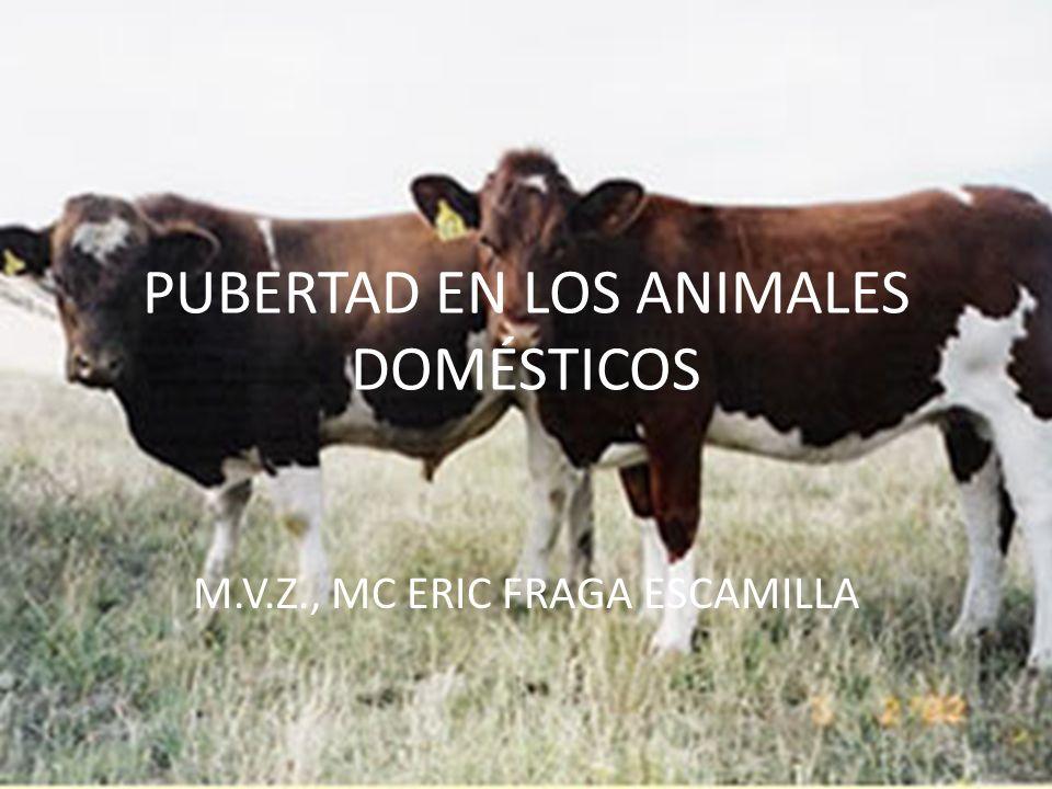PUBERTAD EN LOS ANIMALES DOMÉSTICOS