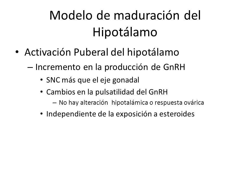 Modelo de maduración del Hipotálamo