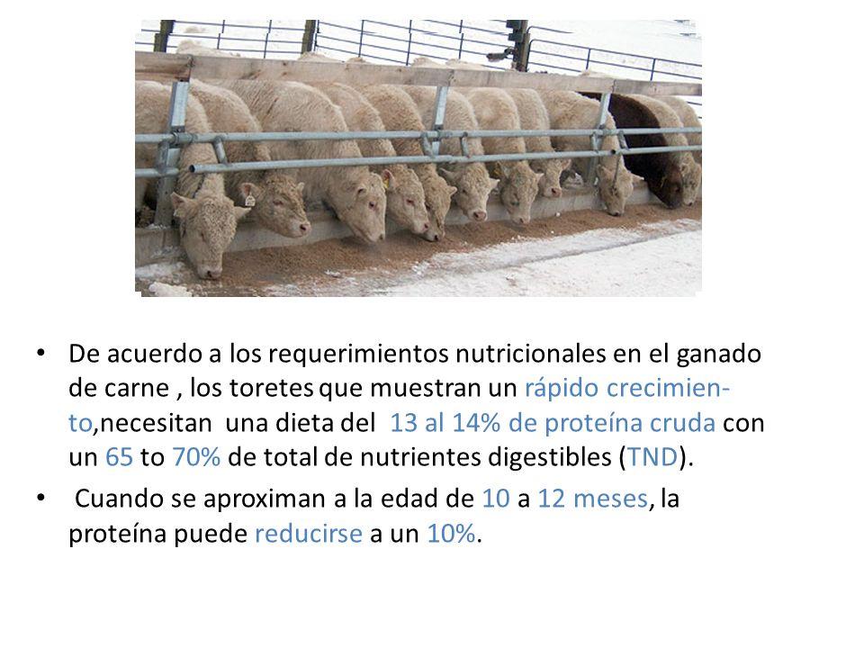 De acuerdo a los requerimientos nutricionales en el ganado de carne , los toretes que muestran un rápido crecimien-to,necesitan una dieta del 13 al 14% de proteína cruda con un 65 to 70% de total de nutrientes digestibles (TND).