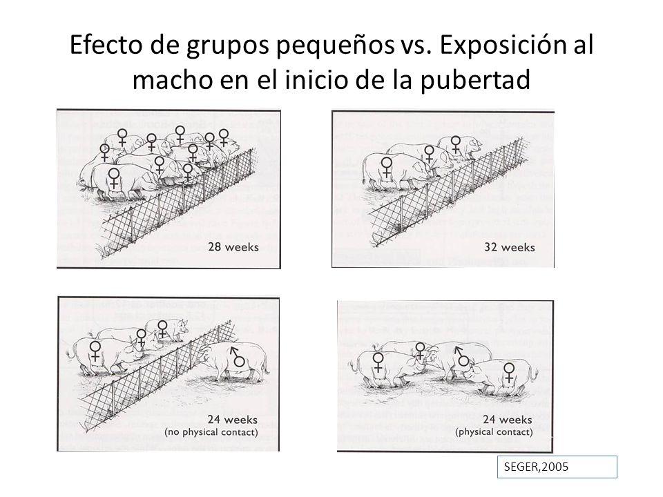 Efecto de grupos pequeños vs