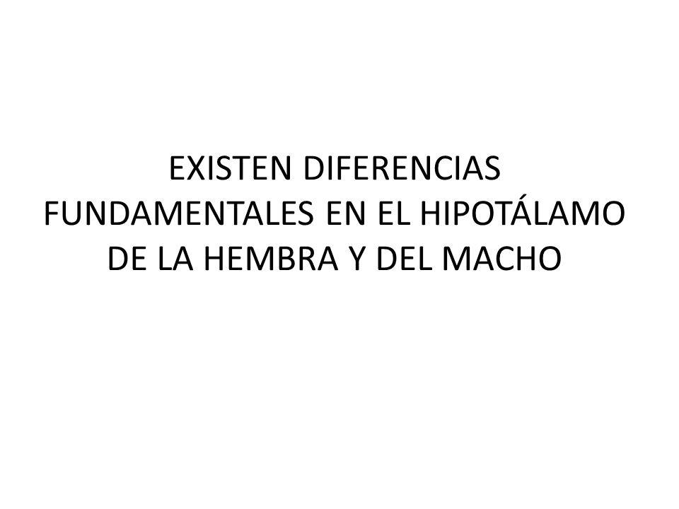 EXISTEN DIFERENCIAS FUNDAMENTALES EN EL HIPOTÁLAMO DE LA HEMBRA Y DEL MACHO
