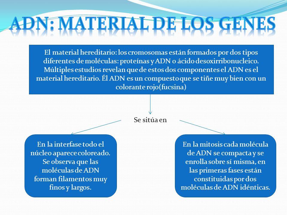 ADN: material de los genes