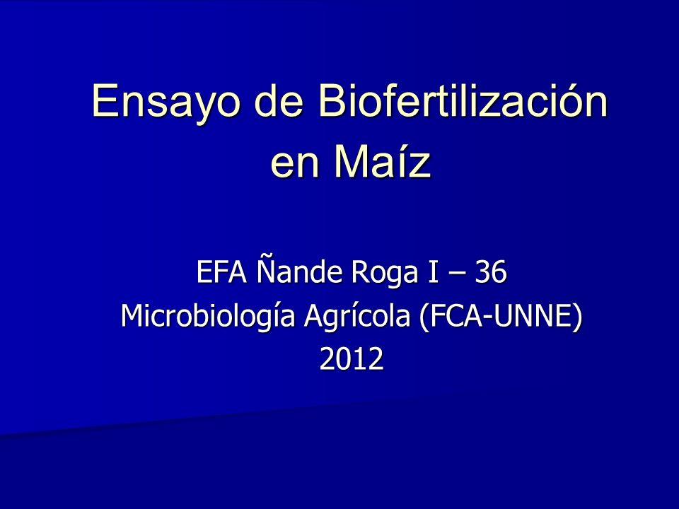 Ensayo de Biofertilización en Maíz