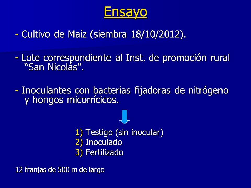 Ensayo - Cultivo de Maíz (siembra 18/10/2012).
