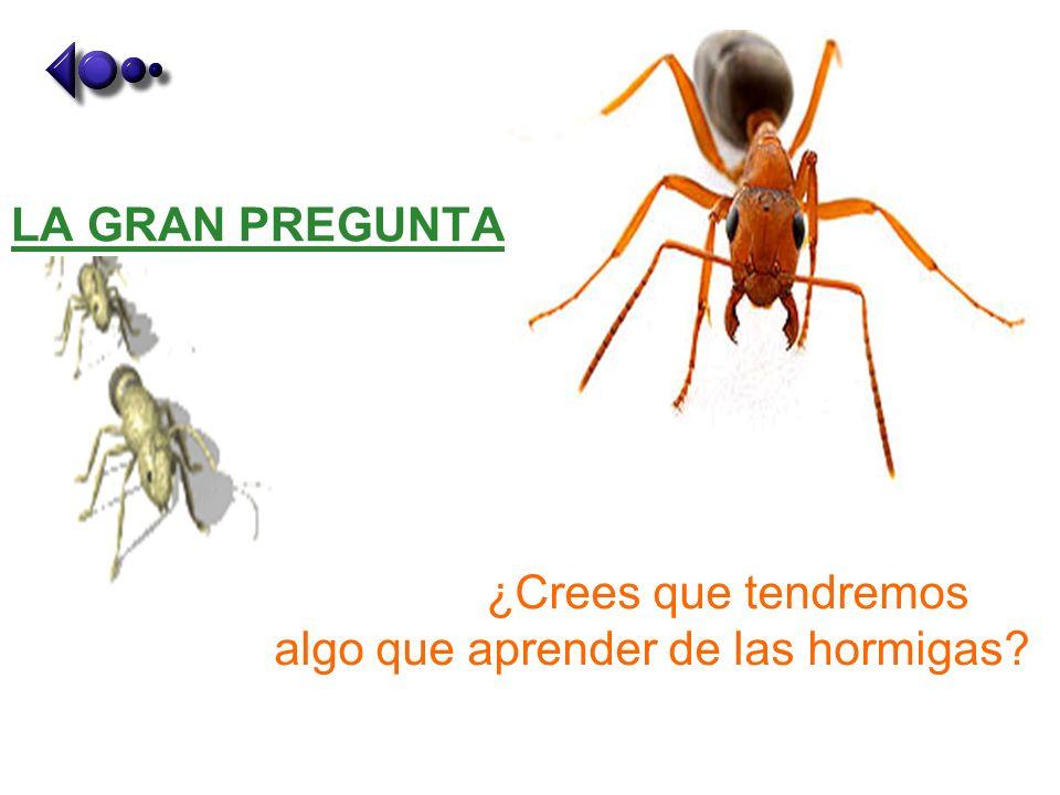 ¿Crees que tendremos algo que aprender de las hormigas