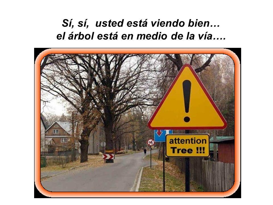 Sí, sí, usted está viendo bien… el árbol está en medio de la vía….