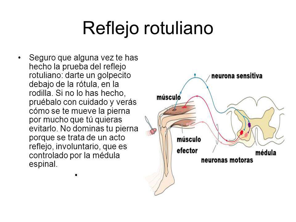Reflejo rotuliano