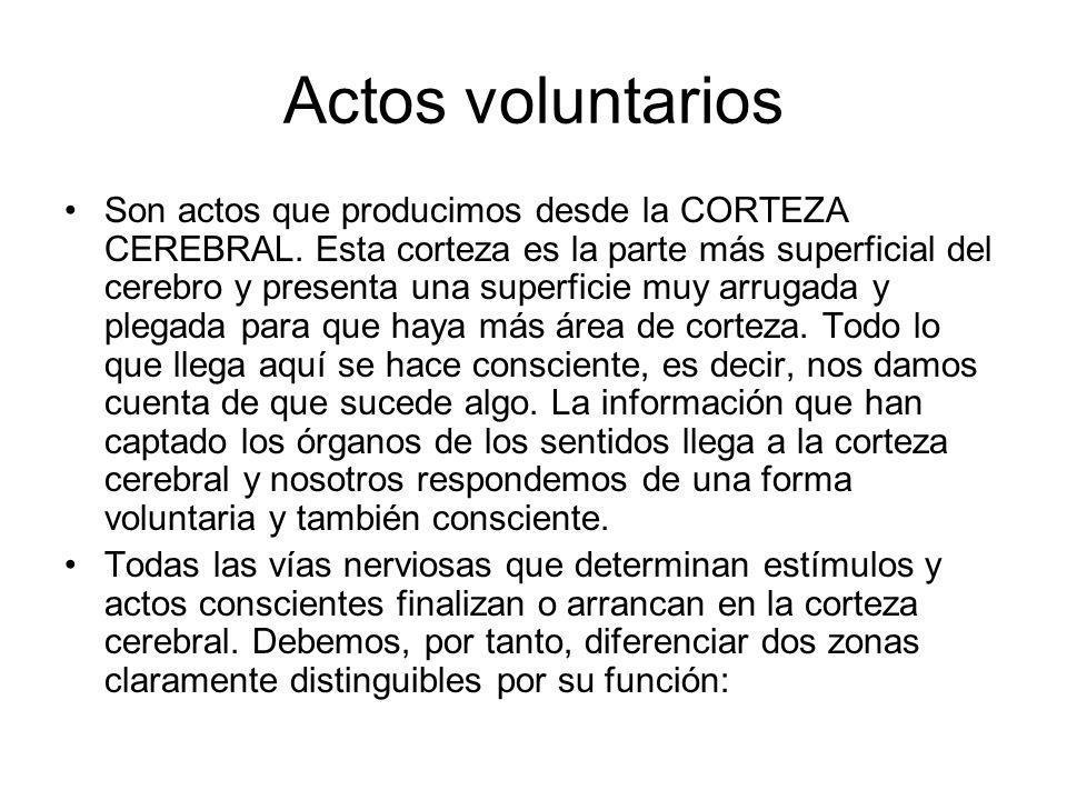 Actos voluntarios