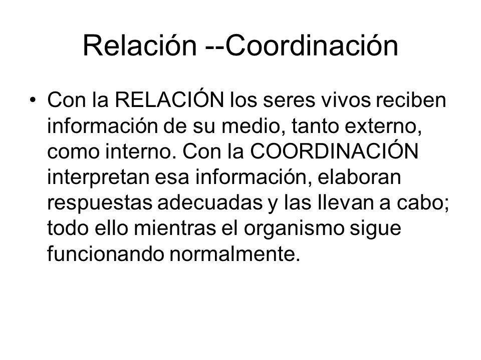 Relación --Coordinación