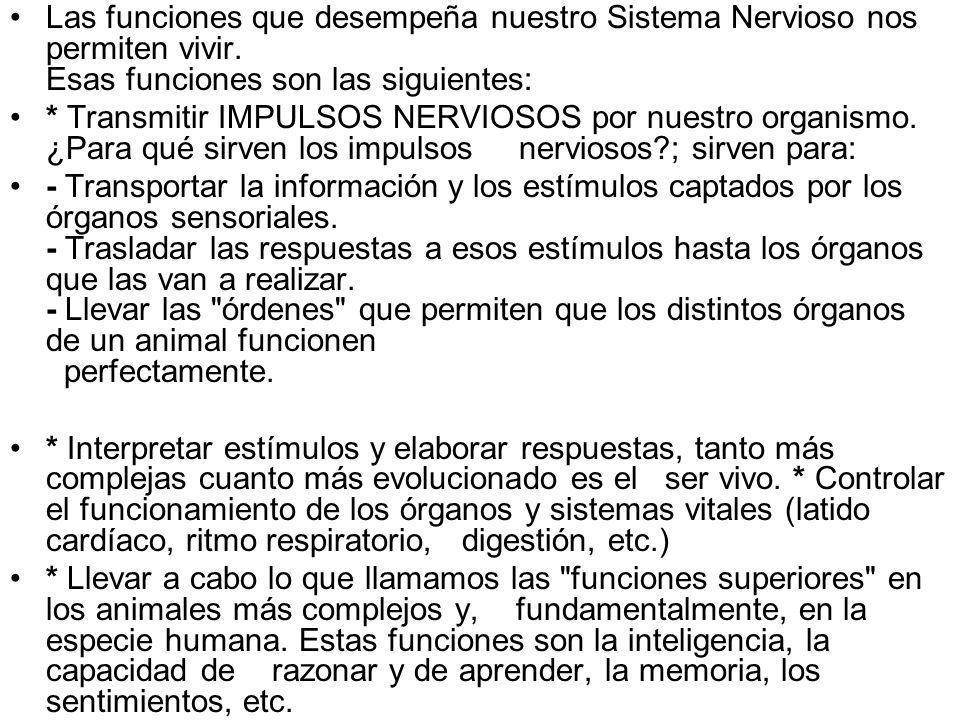 Las funciones que desempeña nuestro Sistema Nervioso nos permiten vivir. Esas funciones son las siguientes: