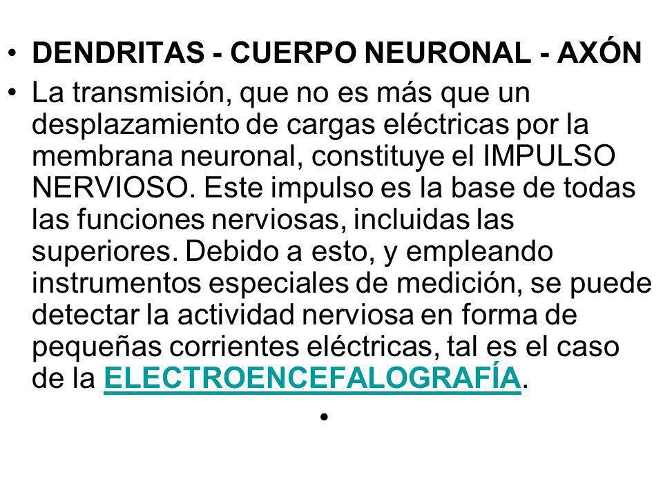 DENDRITAS - CUERPO NEURONAL - AXÓN