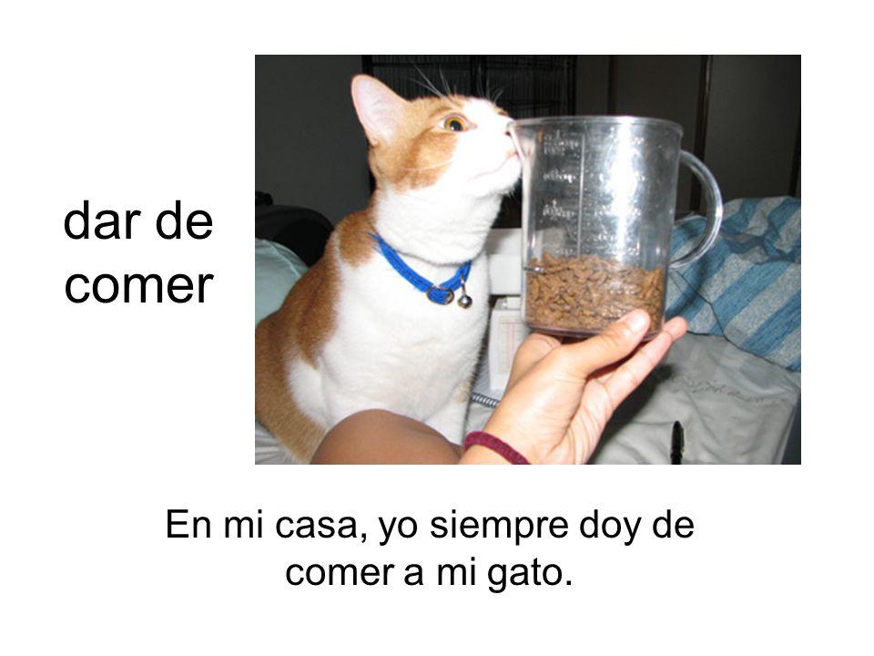 En mi casa, yo siempre doy de comer a mi gato.