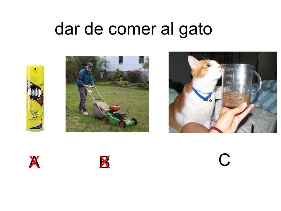dar de comer al gato C A X X B